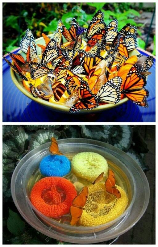 How to Make a Plate Butterfly Feeder Make your own butterfly food by mixing 10 parts water with one part sugar. Heat the mixture until the sugar dissolves, and allow to cool.