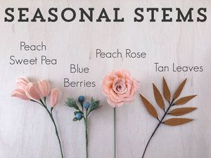 Seasonal-Stems-1.jpg
