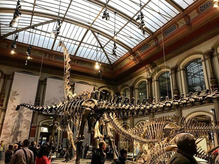 A museum with dinosaurs  #dinosaurs #dinosaurmuseum #berlin #naturkundemuseum #danishadventurer