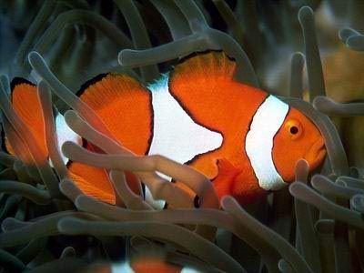 peixes ornamentais 8
