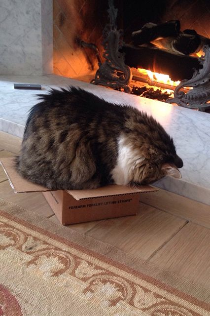 12 adorable cats in boxes because...Friday: