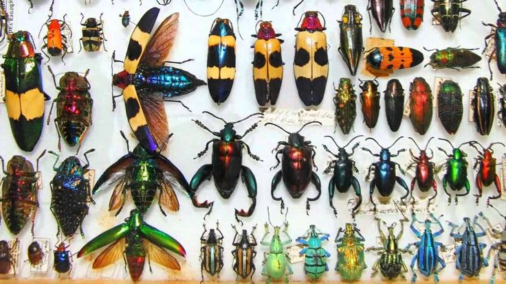 Jewels of the Insect World - Amazing Tropical Beetles 720p HD ...