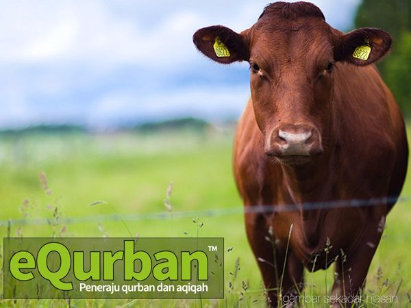 Qurban Online eQurban di Indonesia, Kamboja dan Mekah