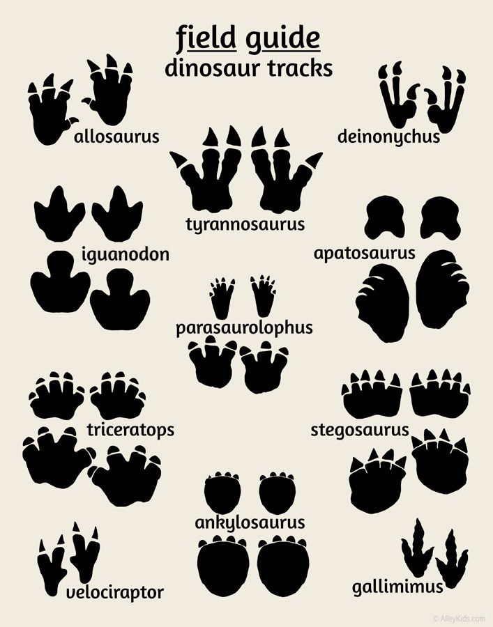Dinosaur Tracks Poster, Field Guide Series