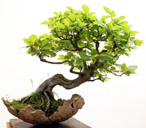 1000 id es sur le th me tatouage de bonsa sur pinterest for Entretien bonsai interieur