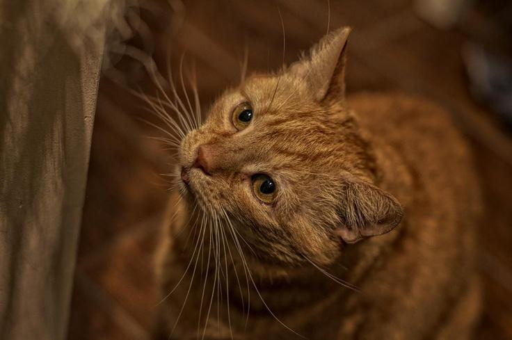 #cat #animal     Redek;)