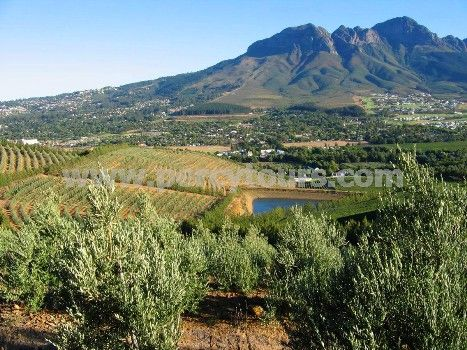 Wine Tours of Hermanus and Stellenbosch by - http://www.percytours.com/wine-tours--wine-tasting.html