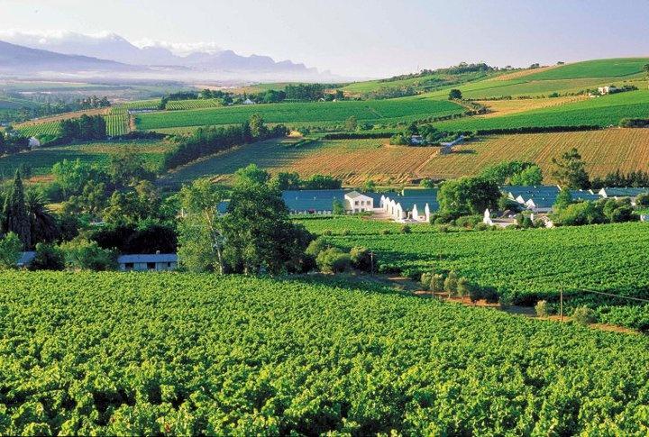 La zona vitivinicola di Stellenbosch