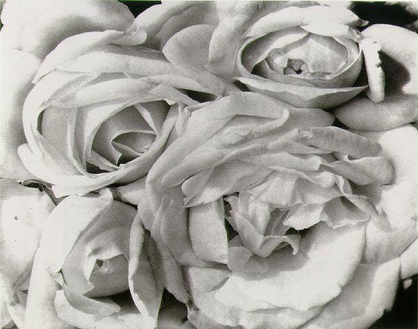 Roses - Tina Modotti, 1925