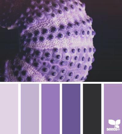 urchin purples