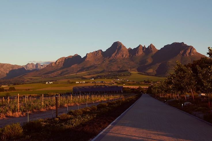 The first green star rated venue in South Africa www.cavalliestate.com #eco #chic #winelands #green #wedding