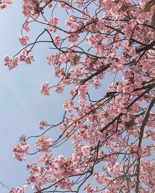 Spring fling  So happy about this warm weather and all the blooming! Instant good vibes  . Have a lovely week! . . . #springfling #blooming #cherryblossomseason #cherryblossom #cherryblossoms #pinktrotters #ihavethisthingwithpink #ig_switzerland #igersswitzerland #travelswitzerland #igerszurich #zurich #visitswitzerland #zurichcity #dametraveler #girlsborntotravel #wearetravelgirls #sheisnotlost #swissblogger #swissfashionblogger #blogger_ch #blogger_de #zürich #finditliveit #pastelsquares…
