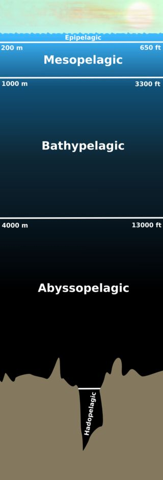 Diagram  Layers Of Ocean Pelagic Zone  The Water Column Of Open Ocean