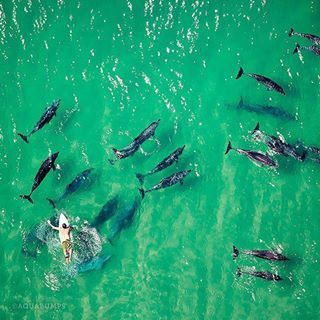 Swimming with dolphins in Byron Bay