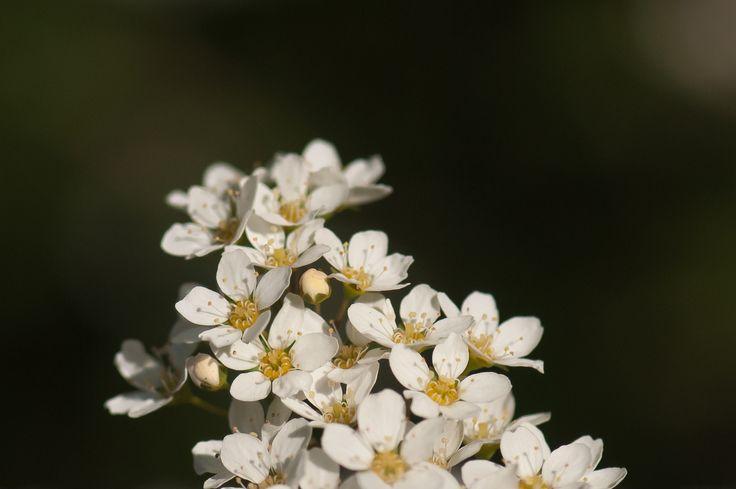 les fleurs by Graziella Serra Art & Photo on 500px