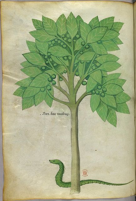 Miniatures of a tree and a snake - (Tractatus de Herbis - Sloane 4016 f. 65v)