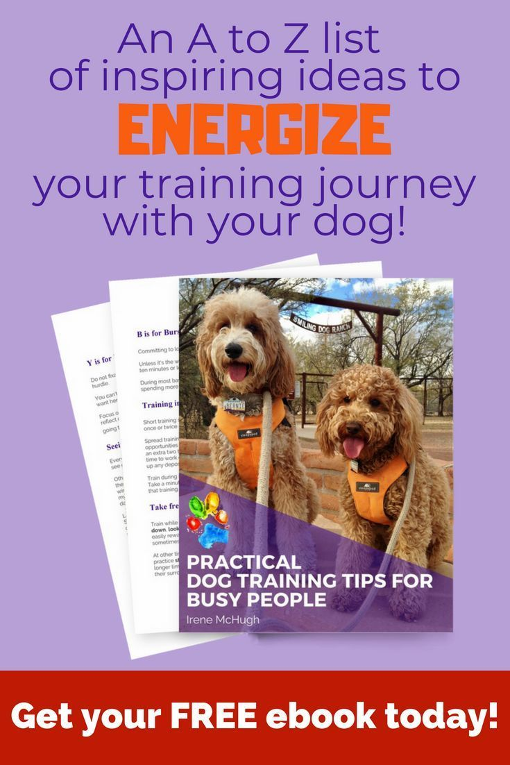 Do You Want To Spend More Time Training Your Dog But You Re Not