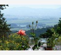 Delheim Restaurant - Garden Terrace