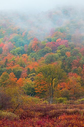 """Crazy Vermont Color in New England This world, made by God""""s spoken word, is so beautiful, I can't imagine how the hereafter can be more beautiful, but God's word says it will be."""