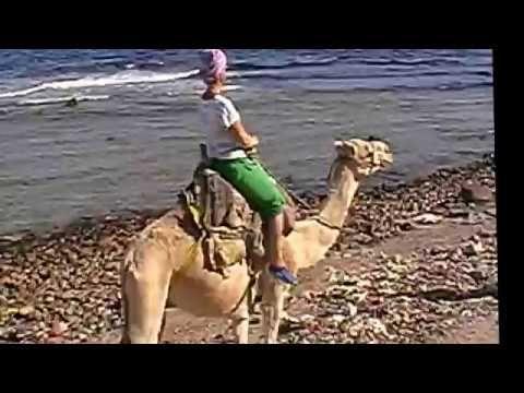 Путешествие, Туризм, Русские в Египте, Семейный отдых, Шарм-Эль-Шейх. 20...