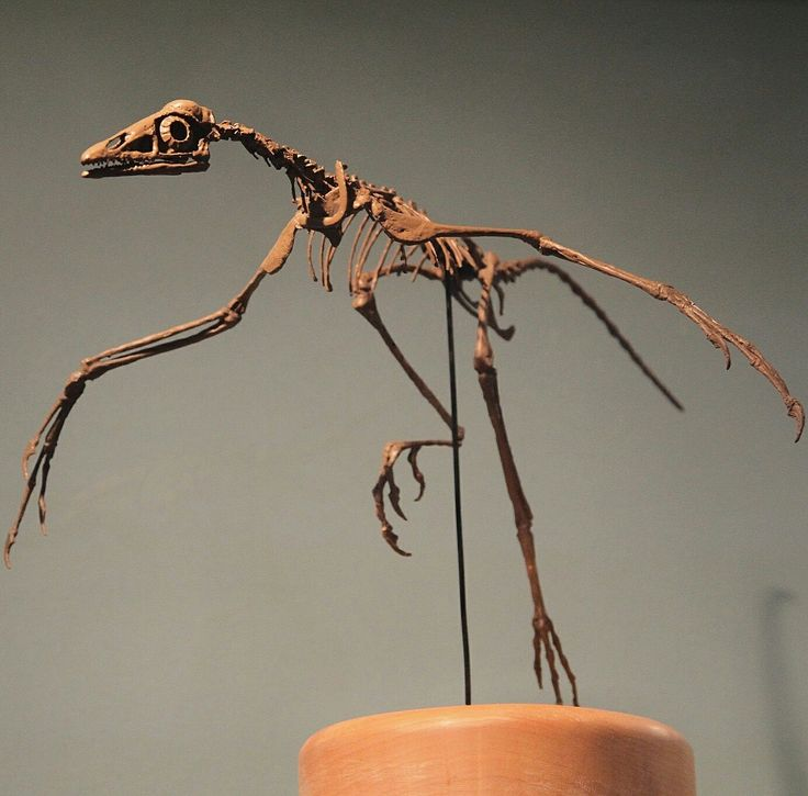 an analysis of archaeopteryx fossils during the jurassic period Archaeopteryx definition, a reptilelike fossil bird of the genus archaeopteryx, from  the late jurassic period, having teeth and a long, feathered, vertebrate tail.