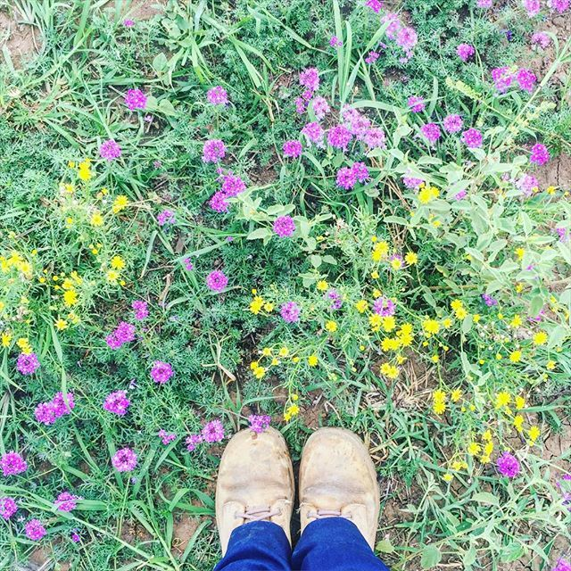 Weedy wild things.   #thatsdarling #love #wildflowers #flora #VSCOcam #greenlifelove