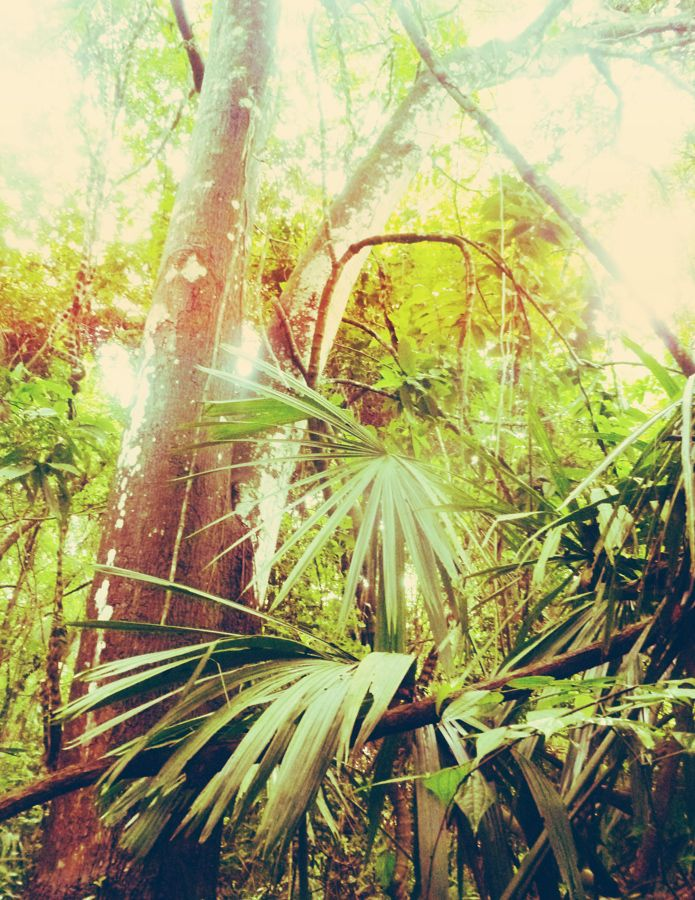 #palm #tayrona #colombia #jungle #vegetal #paradise #lost