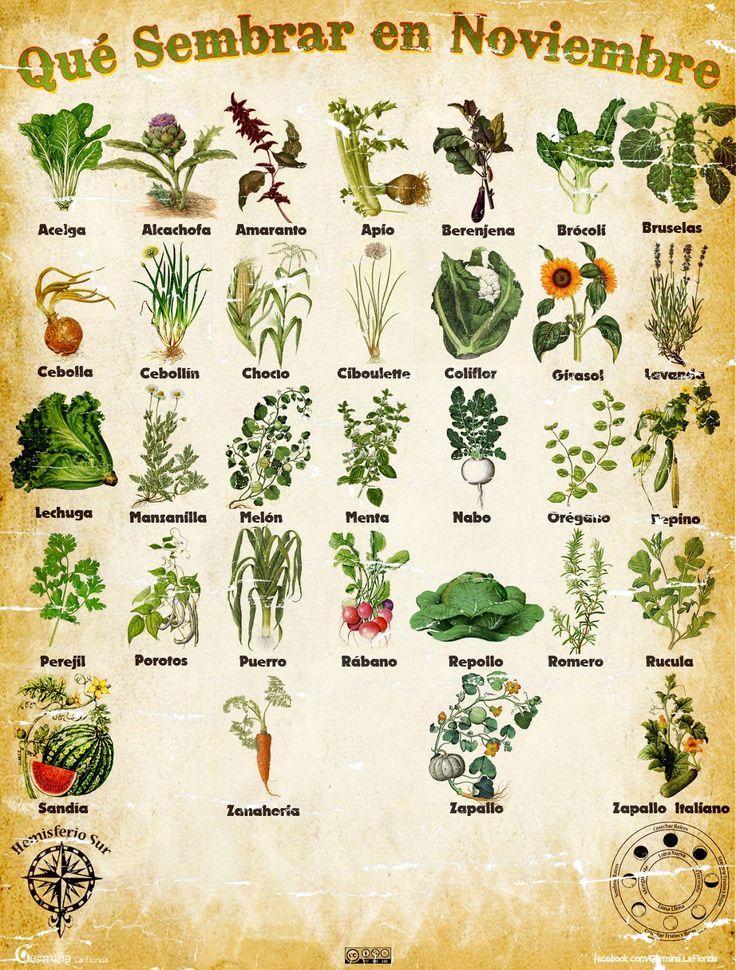 Les traemos este útil calendario de las Siembras del mes de Noviembre, además de fichas con información específica de cada planta que po...