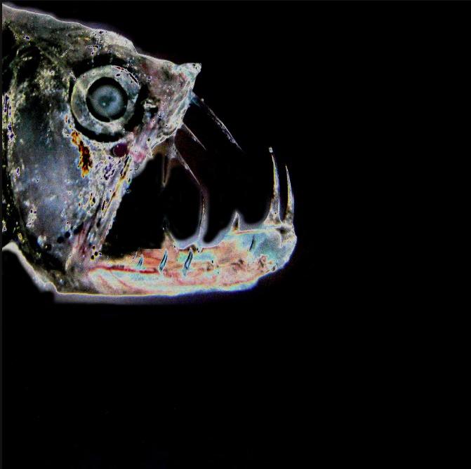 226 best deep sea predators images on pinterest predator for Weird deep sea fish