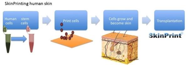 Print3d World: SkinPrint: Cómo crear piel humana con células madre y una impresora 3D