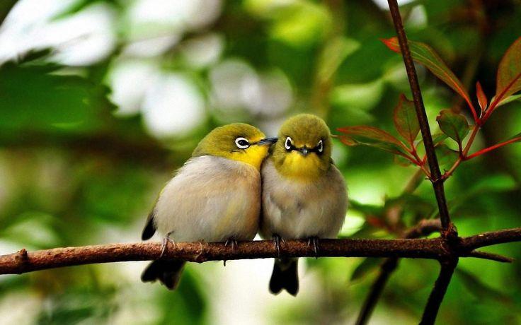 Birds kissing. How cute😃😘 Birds, Animals beautiful
