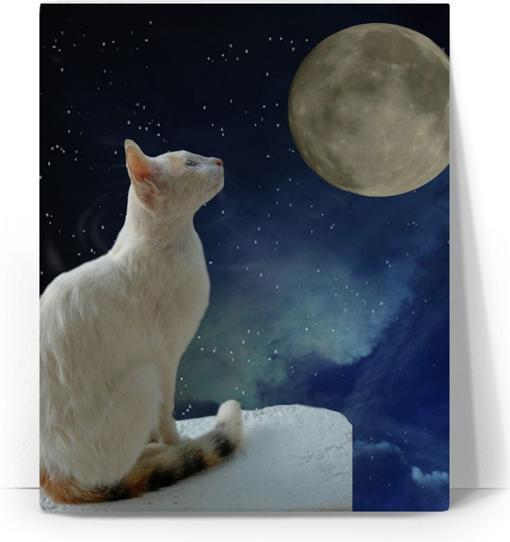 Check out my new product https://www.rageon.com/products/cat-and-moon-art-canvas-print?aff=BWeX on RageOn!