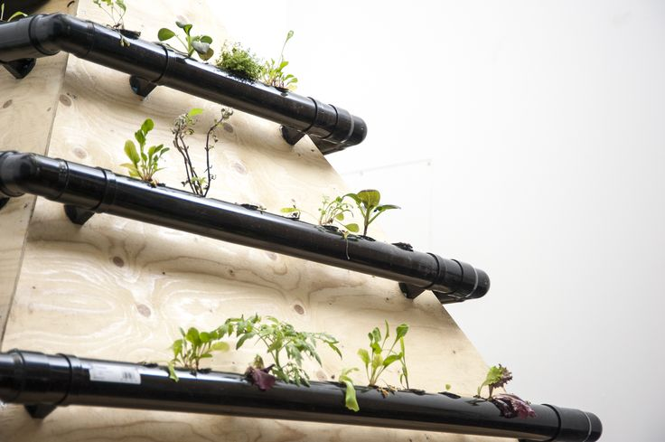 Rachel Rayns and Raspberry Pi Foundation's 'Neurotic Machines' - Robotic gardening systems. See it now at FACT as part of 'Build Your Own'. http://bit.ly/1T9KQmx