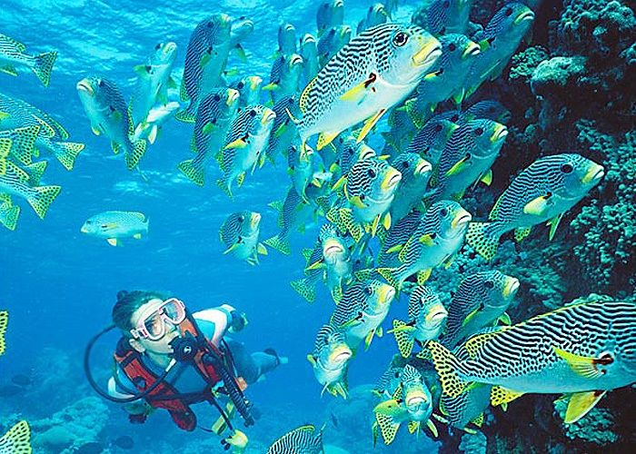 Plongée sous marine en Algarve