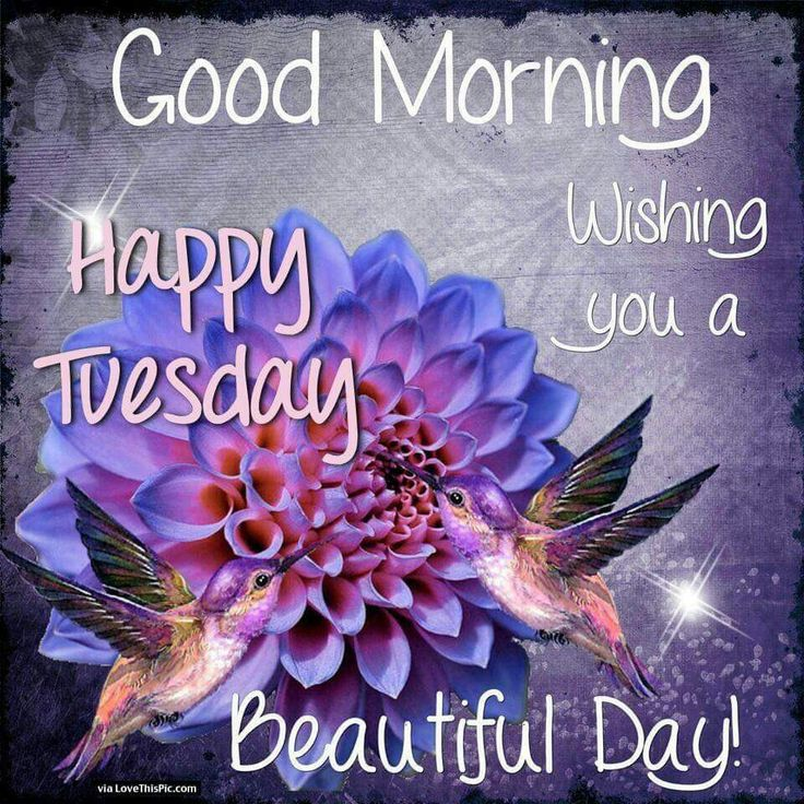 Beautiful Day Quotes: 25+ Best Ideas About Good Morning Tuesday On Pinterest