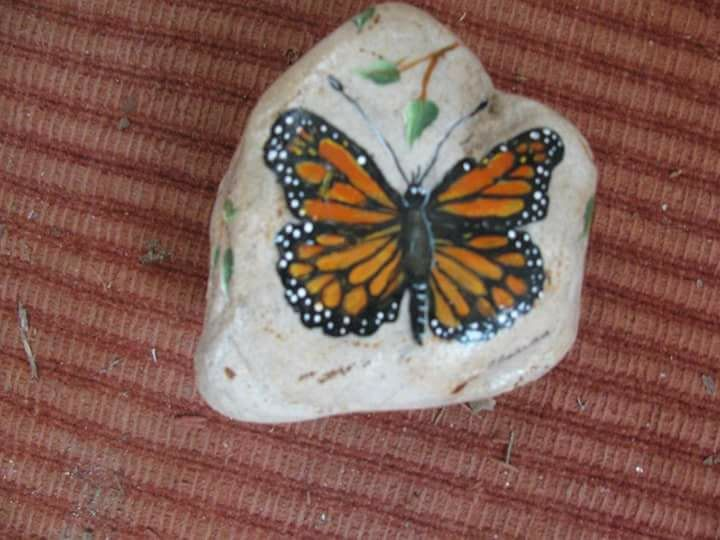 Butterfly Images On Pinterest