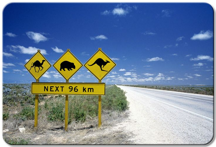Motorbike hire in Australia. Rent a Harley ride around Australia. See native Australian animals, ride to the beach, the Great Ocean Road or into the Outback.