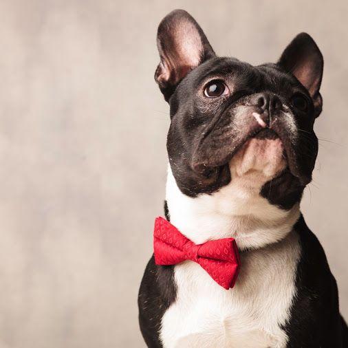 Bequem online kaufen, Belcando Hundefutter und Leonardo Katzenfutter | NAPETITO.com