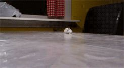 Flat hamster to the rescue�  You will probably have to click through to see it, but it is so FUNNY!
