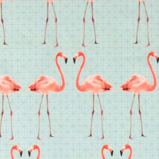 Baumwolle, Aqua mit Flamingos