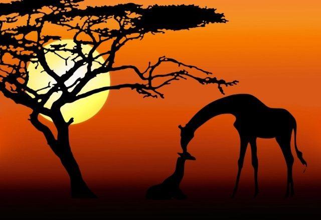 SUNSET & GIRAFFE BOTSWANA 1