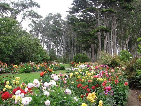 Mendocino Coast Botanical Gardens, Fort Bragg, CA.