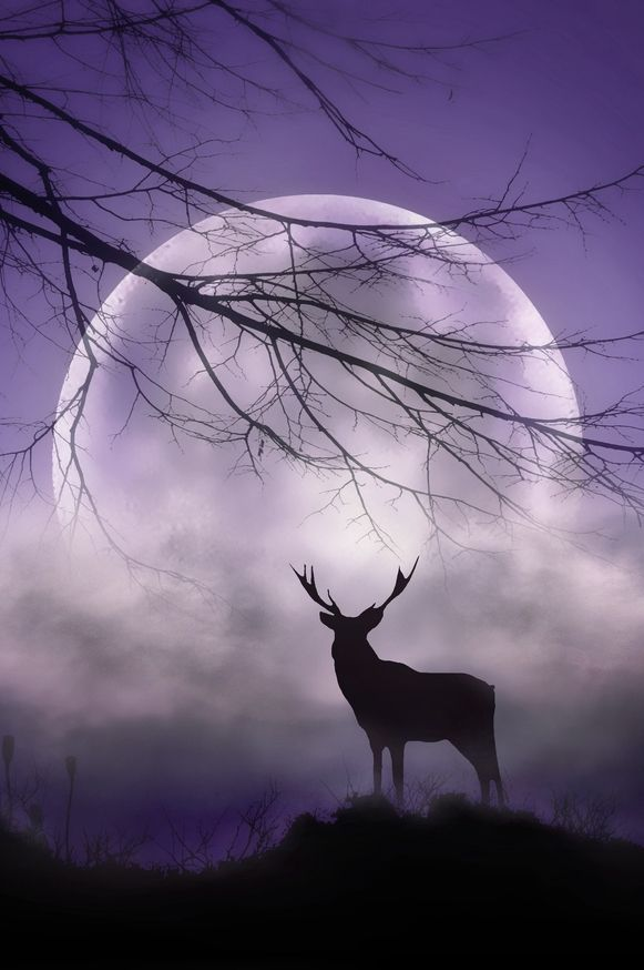 July: The Buck Moon Buck deer start growing velvety hair-covered antlers in July. Frequent thunderstorms in the New England area also resulted in the name Thunder Moon. Some tribes also used Hay Moon.