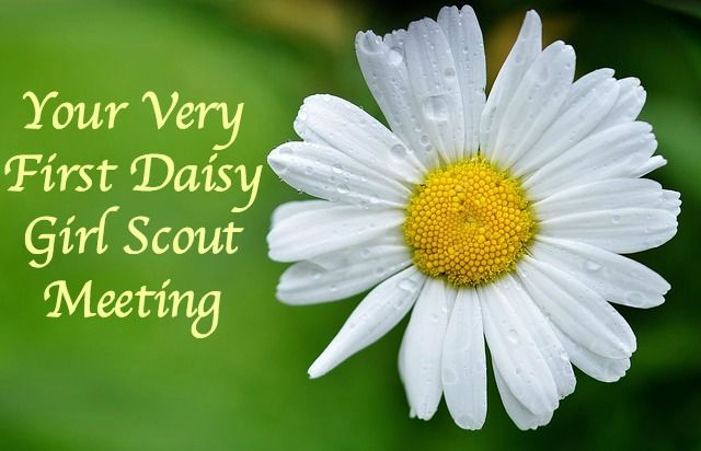 Your Very First Daisy Girl Scout Meeting-What you need to do to launch your troop for success.