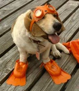 Shopforpaws.com wants to help keep your dog safe. A must read for 6 tips to keeping your #dog safe around water http://bit.ly/1HUqfiB. We have a great selection of water safety products including dog life vests, dog booties and paw protection. #dogs #pets http://shopforpaws.com/