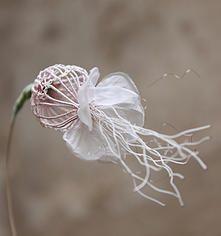 Laurence Aguerre - Sculptures Textiles - j'aime le coté raffiné de la fleur