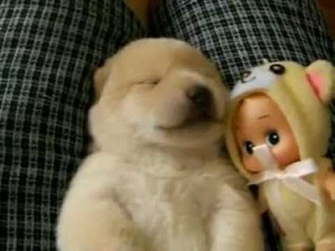 Dreaming puppy talks in his sleep