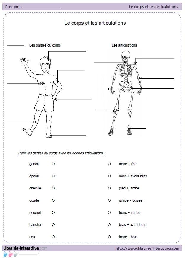 Une leçon accompagnée d'un exercice d'application pour retenir les principales parties du corps et les articulations.