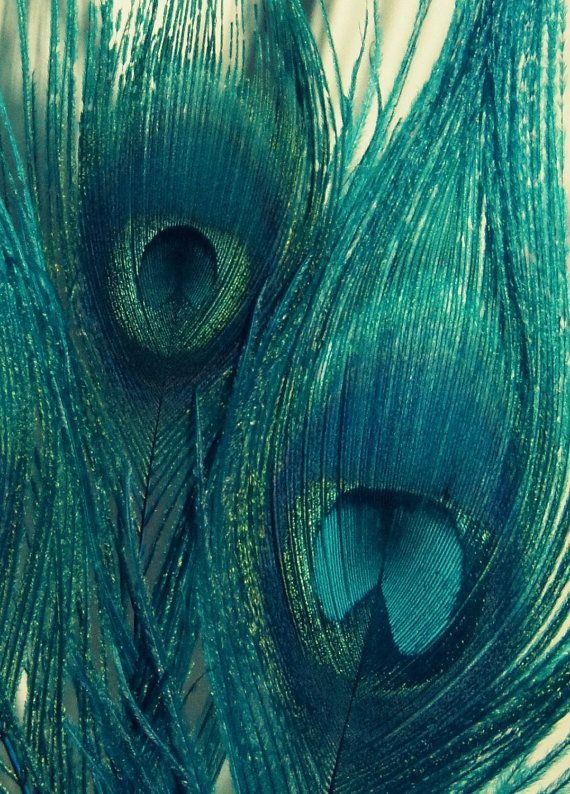 teal peacock feathers bird feathers wall art blue green navy home decor