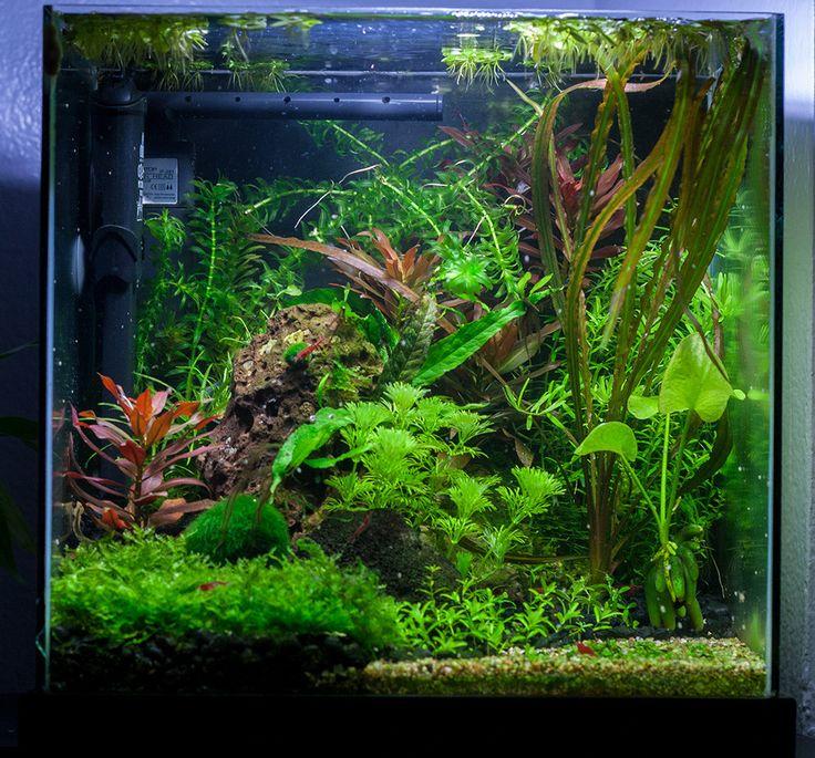 Dirted Tank Google Search Fish Tank Ideas Pinterest